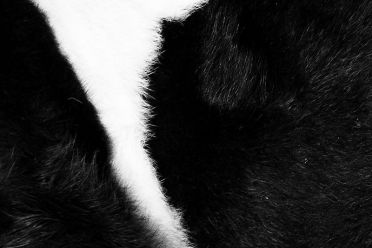 THE COW. DETAIL IN BLACK AND WHITE