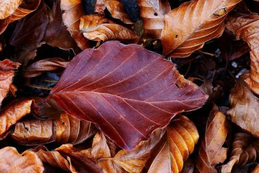 THE LEATHER LEAF