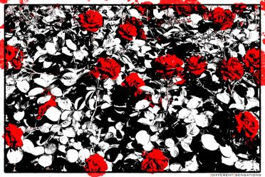 RED ROSES ON THE STREET