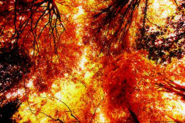 THE BURNING AUTUMN